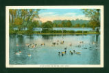 Indian Lake Wild Ducks Postcard