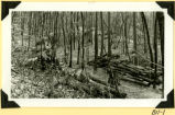 Fort Hill, piled timber photograph