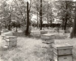 A. I. Root Company Bee Hives Photograph