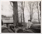 Man on tractor at a sugar bush