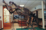 Ground Sloth (Megalonyx jeffersonii)